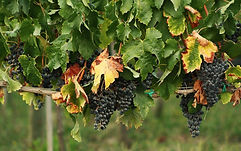 """Degustazione vino e olio extravergine d'oliva"""