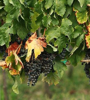 Great Vineyard Escape $495.00