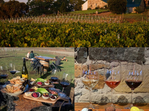 Craigie Knowe Vineyard Is Our Featured Business