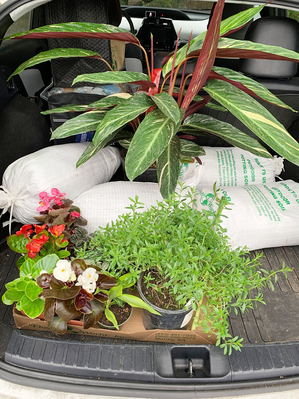 live plants stacked in the back of a car