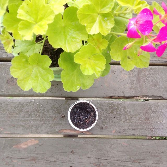 Edible Coffee Body Scrub