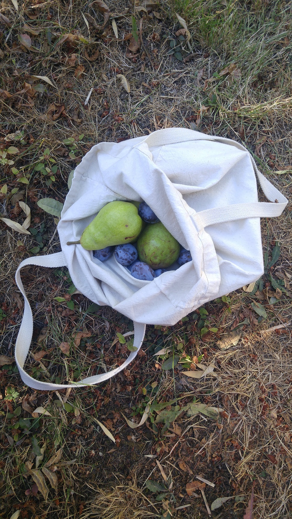 Foraged fruit
