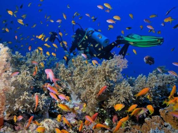 Ras-Mohamed-Under-water.jpg