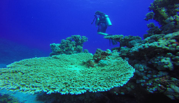 giant-coral-red-sea-diving.jpg