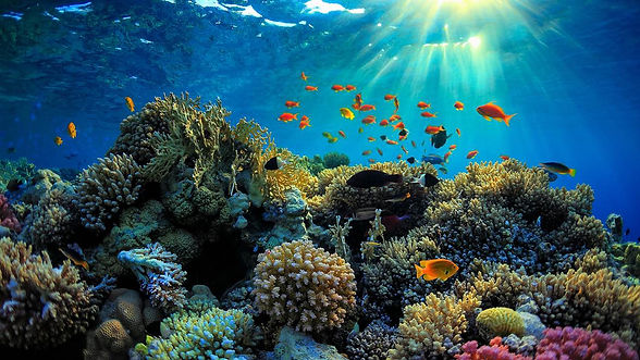 Barriera Corallina.jpg