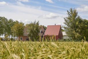 'Klein Betuwe', Nieuw Vennep