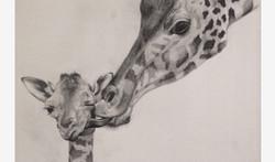 ART_Pencil_Giraffes