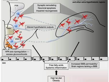 Article Review - Obesity and Neuroinflammation: A Pathway to Cognitive Impairment