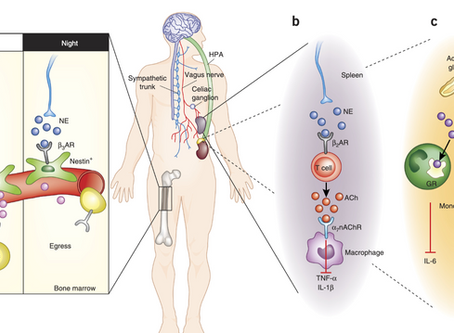 Article Review - Neuroimmune mechanisms of depression