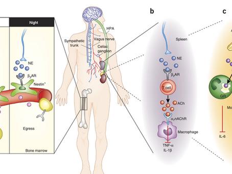 Article Review - Neuroimmune Mechanisms of Depression