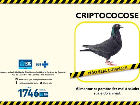 SAÚDEnews: Pombos, bonitos e elegantes, porém perigosos