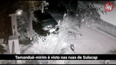 VÍDEO: Tamanduá-mirim é visto nas ruas de condomínio em Sulacap
