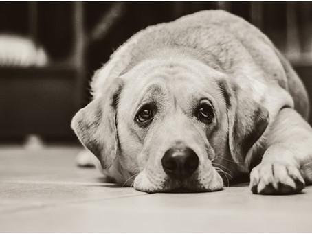 PETSnews | Leptospirose Canina