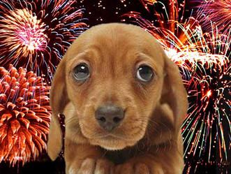 PETSnews | Medo de fogos em cães e gatos