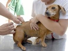 PETS x RAIVA   Em novembro tem vacinação antirrábica na Zona Oeste. Confiram os bairros.
