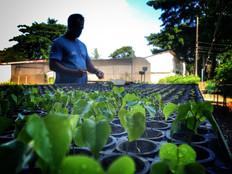 Cedae doa 300 mudas para núcleo de Realengo e plantadas no Parque Estadual da Pedra Branca