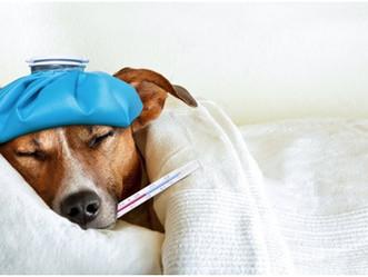PETSnews | Tosse de cachorro? Saiba como evitar