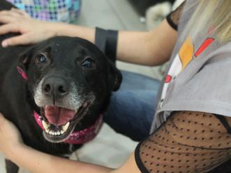 Shopping de Jacarepaguá promove 'Campanha de Adoção de Cães e Gatos'