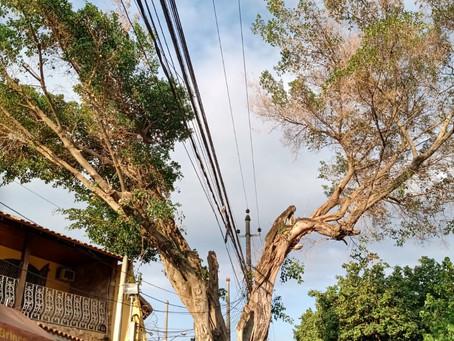 """Light erra na poda e """"desenquilibra"""" árvore em Sulacap. Comlurb foi ao local e corrigiu problema"""