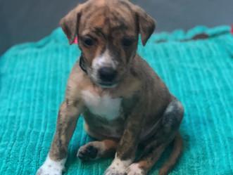 Shopping de Jacarepaguá realiza 'Campanha de Adoção de Cães e Gatos'