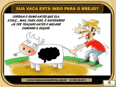 GESTÃOnews | A vaca está indo para o brejo – como evitar?