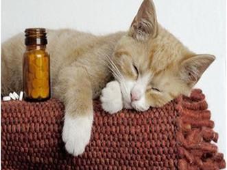 PETSnews | Paracetamol, um grande inimigo do seu pet