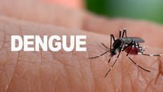 Especialista alerta para aumento no número de casos de dengue e orienta como se proteger