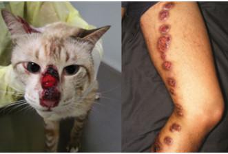 SAÚDEnews | Esporotricose: Aprendendo a zelar pela sua saúde e a do seu gato