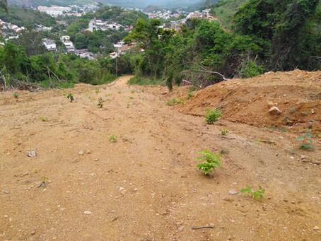 Blitz da Polícia Ambiental na Estrada do Catonho descobre desmatamento