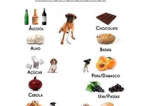 PETSnews | Coisas que seu cachorro (e gato) nunca devem comer