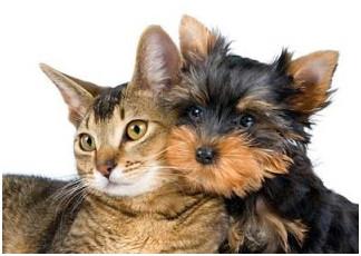 PETSnews | Castrar seu animal é um ato de amor. Que tal considerar?