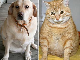 PETSnews | Obesidade canina e felina