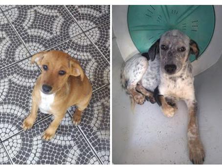 Shopping de Guadalupe promove Feira de Adoção de Animais 'Me dê um Lar'