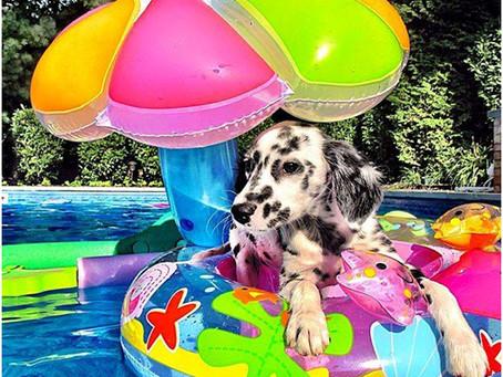 PETSnews | Dicas de verão para cães e gatos
