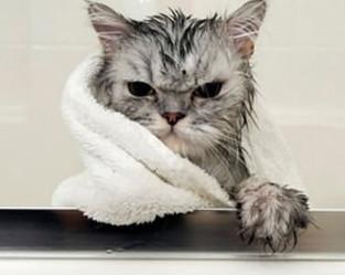 PETSnews | Gatos precisam tomar banho?