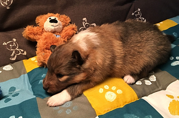 """Ares' Sword """"Ares"""" from Animalsgarden 20.Tag"""