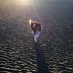 Henry erkundet den Strand