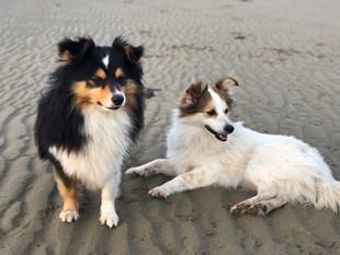 Benni & Nala genießen die Abkühlung am Hundestrand