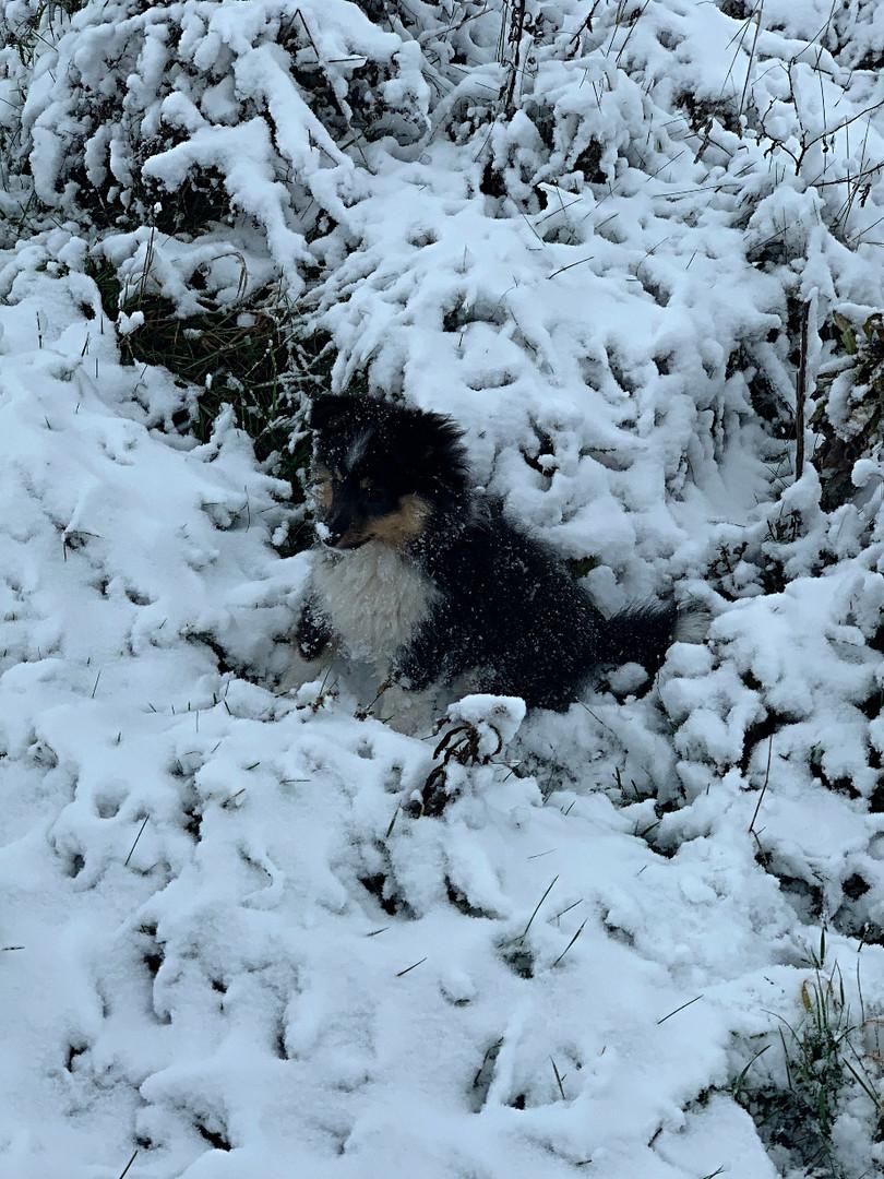 Alaska Ice from Animalsgarden