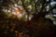 _MG_6940.jpg