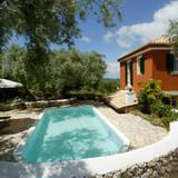 The pool & backyard