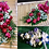 Thumbnail: Hand Bouquets