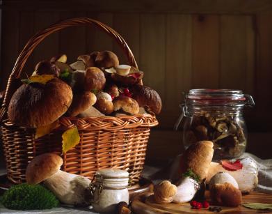 Wild mushroom collection.jpg