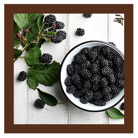 Dica Saudável | A medicina da Folha de Amora-preta