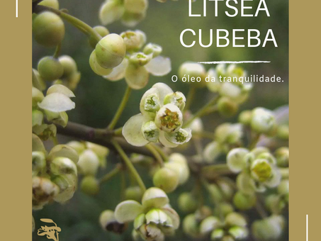 Dica Saudável | Litsea Cubeba | O óleo da tranquilidade