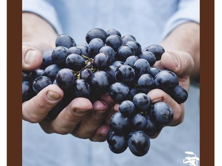 Dica Saudável | Óleo de Semente de Uva