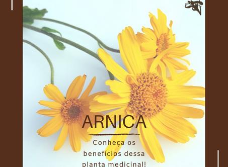 Dica Saudável | Benefícios da Arnica Montana L.