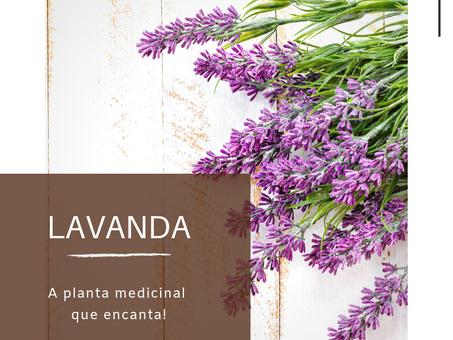 Dica Saudável | Lavanda: a planta medicinal que encanta.
