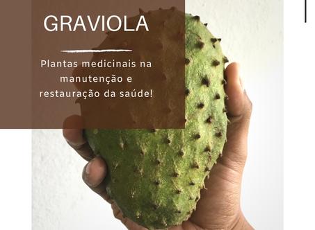 Dica Saudável | Plantas medicinais na manutenção e restauração da saúde | Graviola