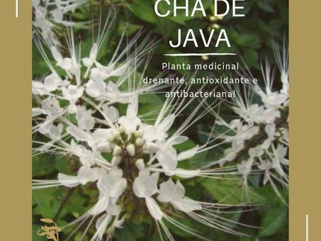 Dica Saudável | Chá de Java